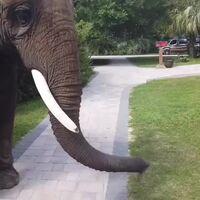 I wish I was the elephant
